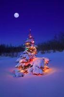snow-scene-at-christmas.jpg