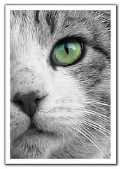 cats-eye.jpg