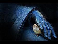 little-sparrow.jpg