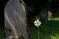 flower71.jpg